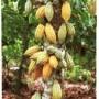 Healthworks-Raw-Certified-Organic-Cacao-Powder-1-lb-0-1